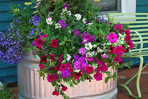 Spring planter 2-08