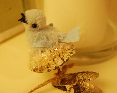Bird-clip-Jenn.-murphy