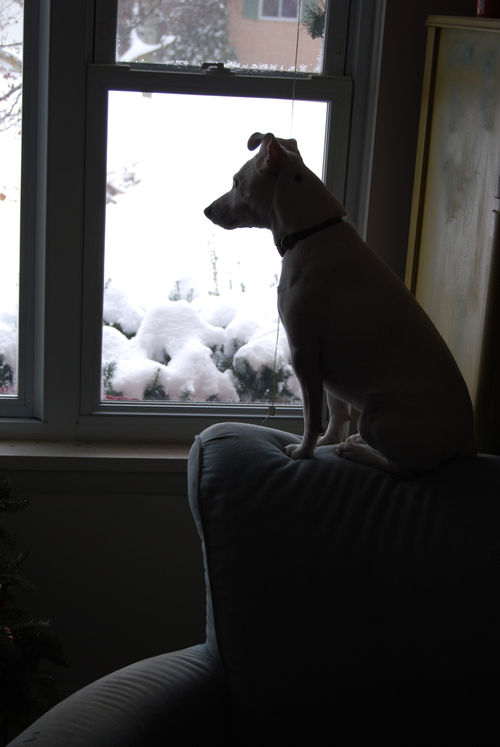 Pearl-looking-out-winter-window