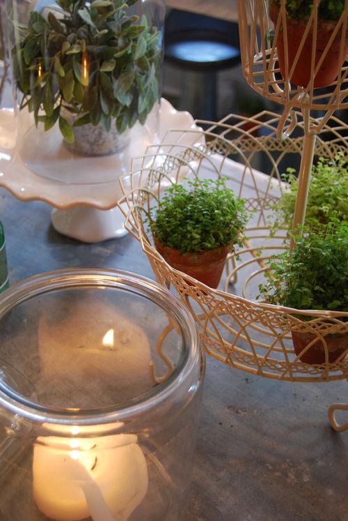 Green-plants-2-09