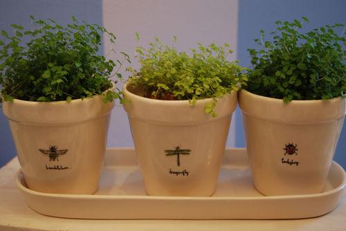 Planter-rae-dunn