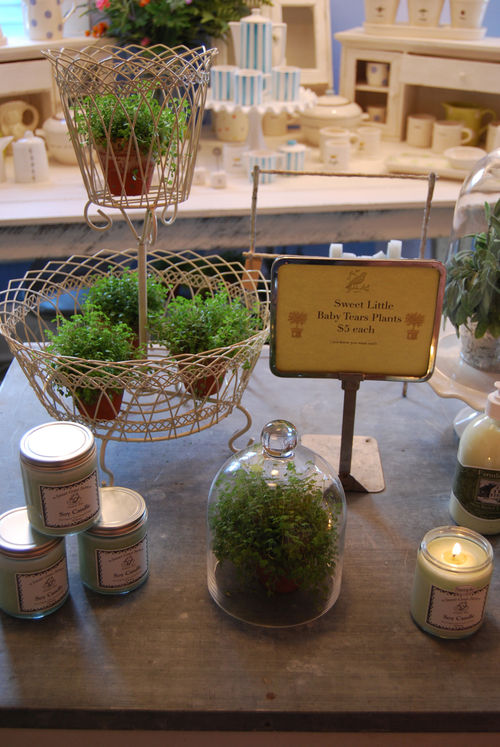 Grren-plants-09