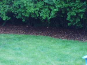 Mulch_beds