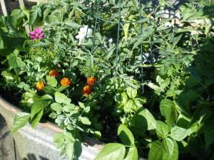 Garden_june_10_07