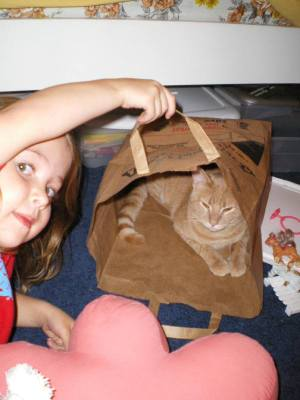 Cat_in_a_bag